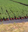 Erős, rézsű növény fólia, szőtt talajtakaró agroszövet gyomosodás ellen (3)