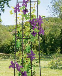 Kerti növény futtató obeliszk
