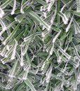 Műsövény kerítésre télen 4