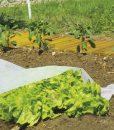 Pára és légáteresztő növény takaró szövet